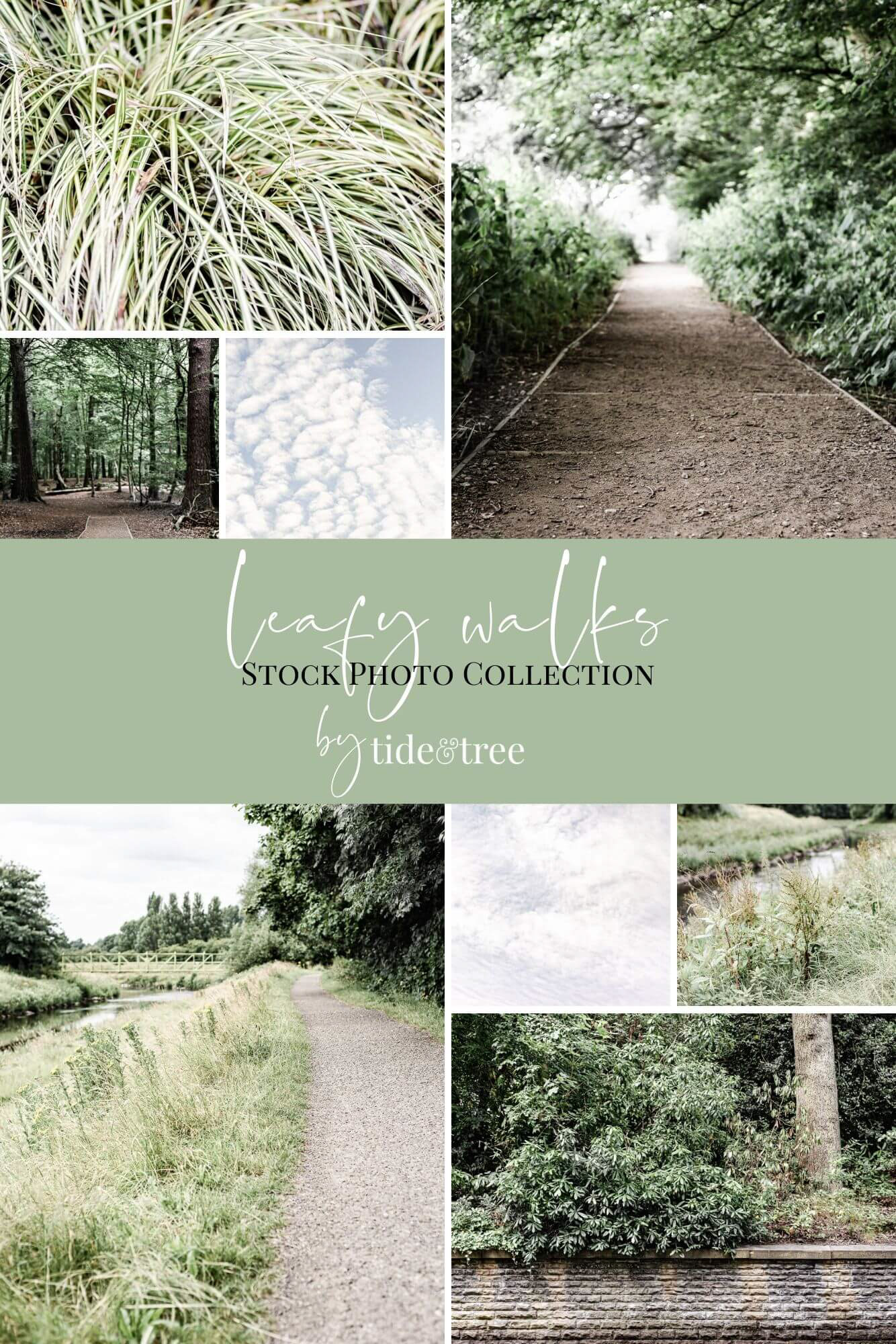 Leafy Walks Stock Image Collection