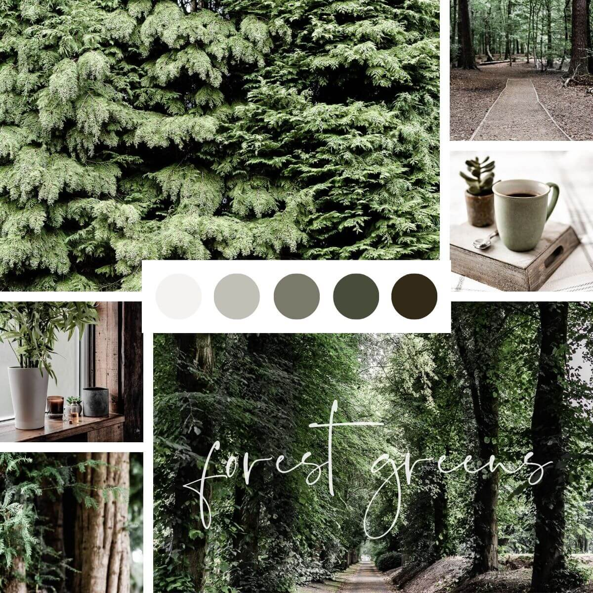 Natural Colours Inspo - Forest Greens