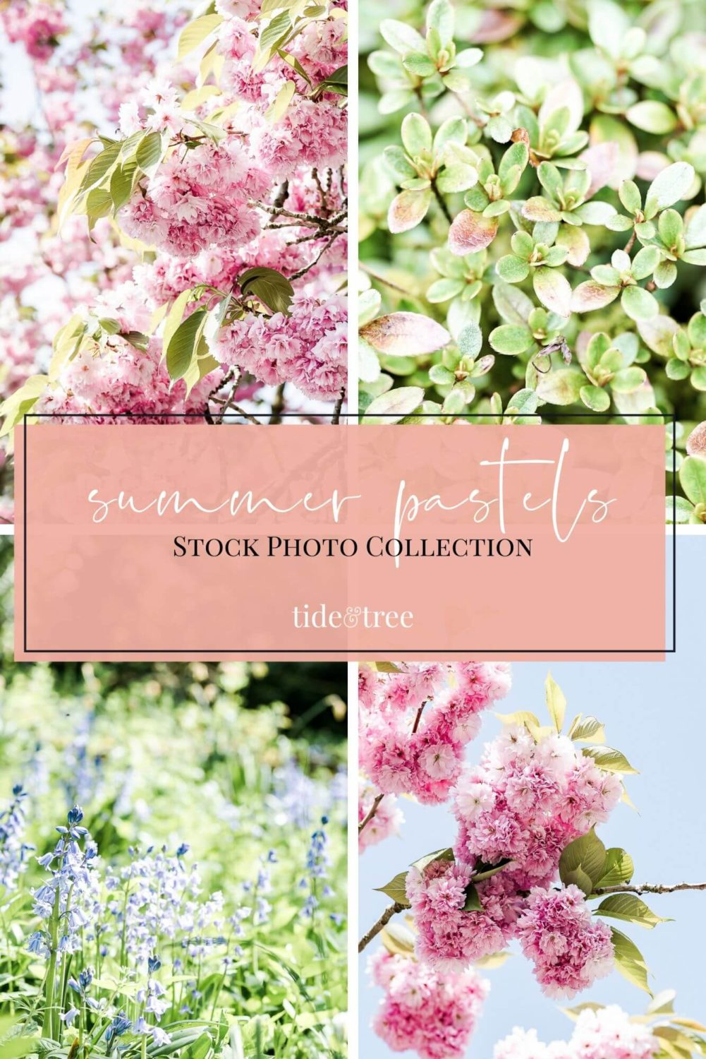 Summer Pastels Stock Photo Collection